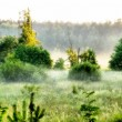 Foggy  morning in a countryside - Stock Photo