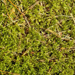 Green moss background — Stock Photo