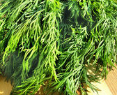 Dill with waterdrops on the wooden desk — Stock Photo