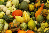 Various kinds of pumpkins — Stock Photo