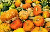 Various kinds of pumkins harvest — Stock Photo