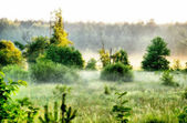 Foggy morning in a countryside — Stock Photo