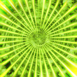 Stock Photo: Green sunshine