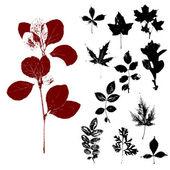Herbs 2 — Stock Photo