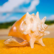 Seashell on gold(en) song — Stock Photo