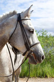 Horse portrait. — Stock Photo