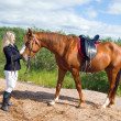 Racehorse outdoor - Stock Photo