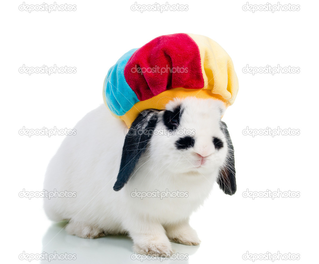 Cute easter rabbit close-up isolated on a white background.rabbit in hat — Stock Photo #2493858