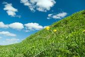 Beautiful Green Meadow — Stock Photo