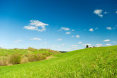 Scenic picture of a meadow — Stock Photo