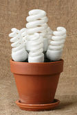 Power saving up bulbs — Stock Photo