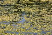 Marshy creek — Stock Photo