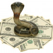 Cobra and US dollars — Stock Photo