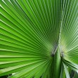 The big green palm leaf — Stock Photo
