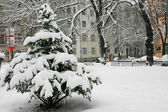 City park in the winter — Stock Photo