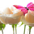 Roses and butterfly - Stock Photo