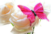 Roses and butterfly — Stock Photo