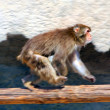 Royalty-Free Stock Photo: Monkey runs