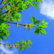 Branch with green leaves — Stock Photo #1545843