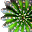 Cactus plant — Stock Photo
