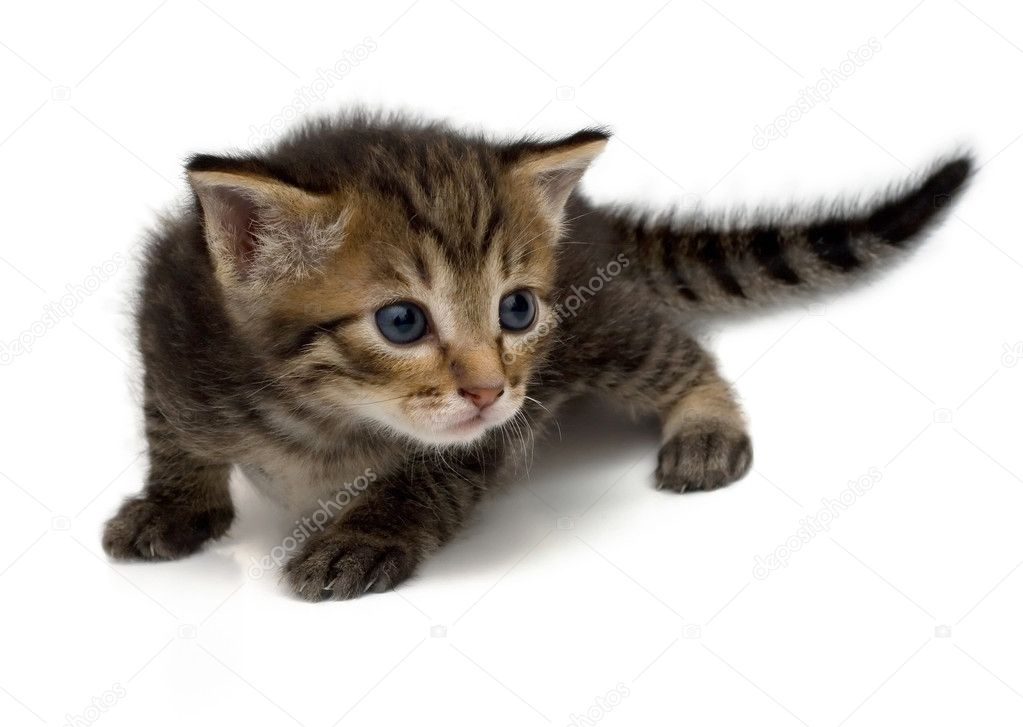 Little dear kitten on a white background. — Stock Photo #1141892