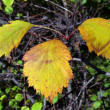 Autumn leaves color - Stock Photo