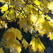 Autumn leaves color — Foto Stock #1183542