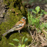Forest bird — Stock Photo
