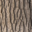 Oak tree bark - Stock Photo