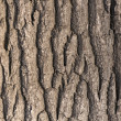 Oak tree bark - Foto Stock