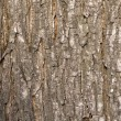Oak tree bark — Foto Stock #1185956