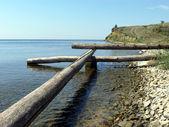 Troncos e pedras no litoral — Foto Stock
