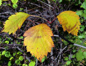 Autumn leaves color — Stockfoto