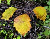 Cor das folhas de outono — Foto Stock