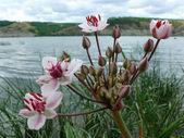 Flores no rio — Foto Stock