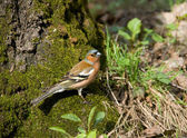 Forest bird — Stockfoto