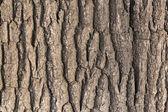 Casca de carvalho — Foto Stock
