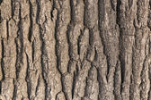 Oak tree bark — Stockfoto