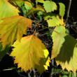 Autumn leaves color — Foto Stock #1223924