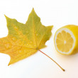 Leaf of maple and lemon — Stock Photo #1225905