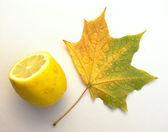 Folha de maple e limão — Foto Stock