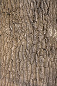 Oak tree bark — Stock Photo
