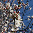 Spring branch of a blossoming tree 2 — Stock Photo