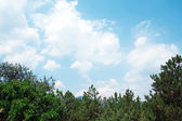 Green pines against the clouds and sky — Stock Photo
