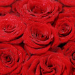 Large bouquet of red roses — Stock Photo