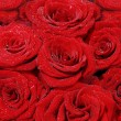 Large bouquet of red roses — Stok fotoğraf
