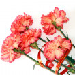 Bouquet of beautiful pink carnations — Stock Photo