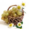 Vine, flowers of camomile is in a basket — Stock Photo