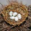 Royalty-Free Stock Photo: Bird nest with eggs