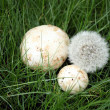 Dandelion and mushrooms on a grass — Stock Photo